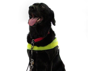 Guide-Dogs-2014